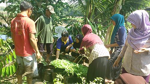 KWT Ponjong Budidayakan Sayuran Secara Verticulture