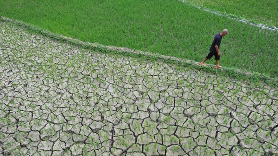 Perubahan Iklim Ganggu Ketahanan Pangan
