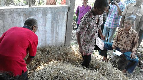 Melimpahnya Limbah Pertanian jadi Berkah untuk Petani dan Ternak Ponjong