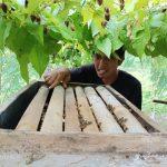 Jaga Kelestarian Hutan, Masyarakat Manfaatkan Potensi Desa